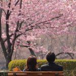 桜の季節は絶対に「お花見デート」は外せない!お花見デートの活かし方